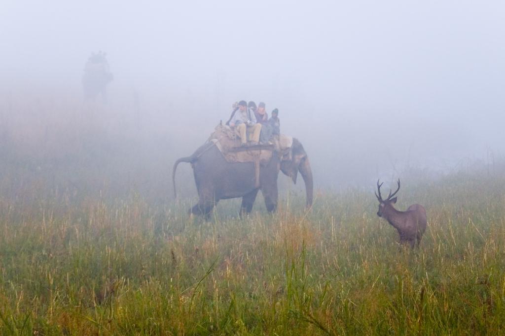 Jim Corbet National Park