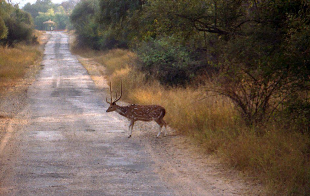 Tourism Sariska National Park